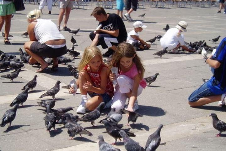 venedik san marco meydanı - venedik güvercinleri - venedikte yapılacaklar