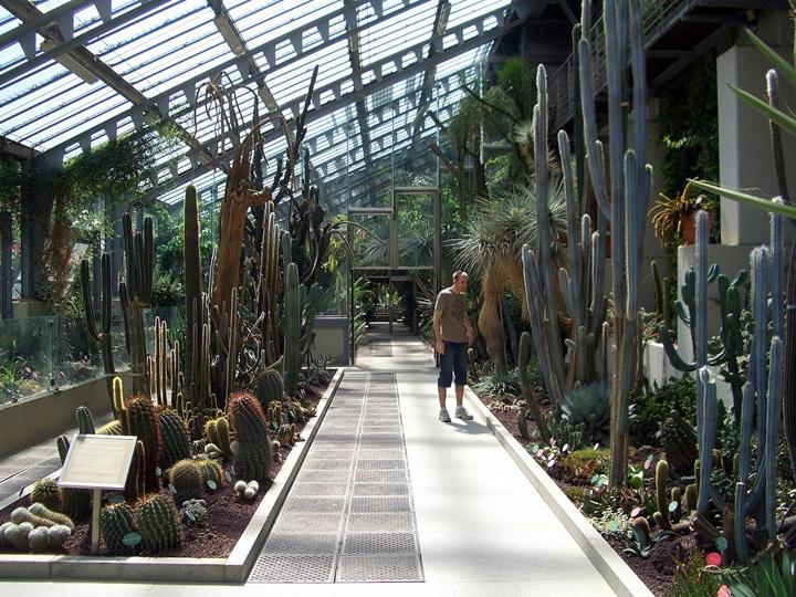 Madrid Kraliyet Botanik Parkında yer alan bitkiler