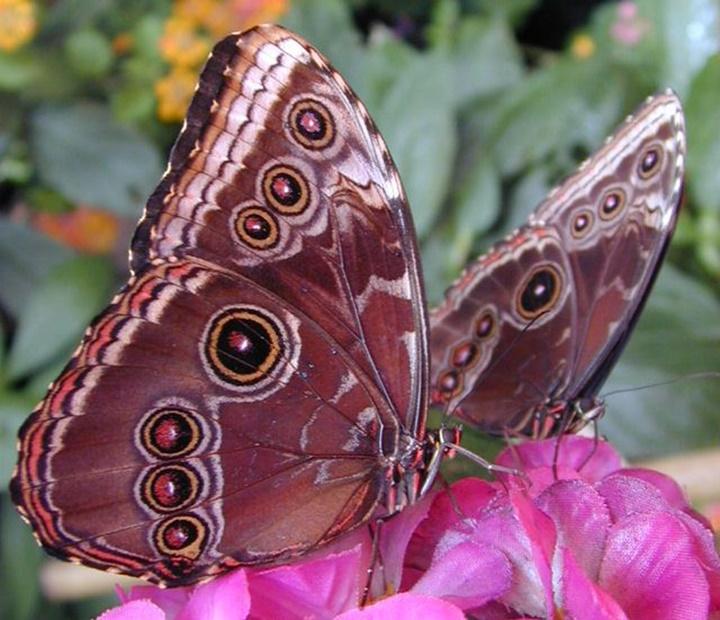 viyyana kelebek evindeki kelebekler