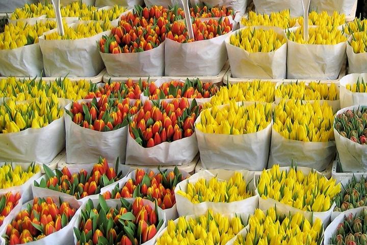 Amsterdam çiçek pazarı resimleri