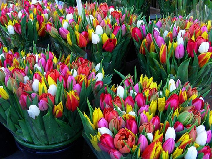 amsterdam çiçek pazarı hakkında bilgi