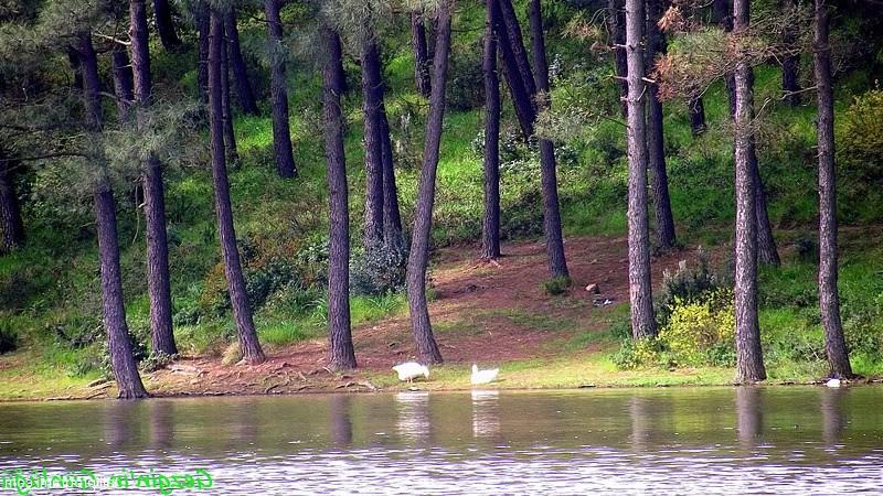 Aydos ormanı piknik alanı