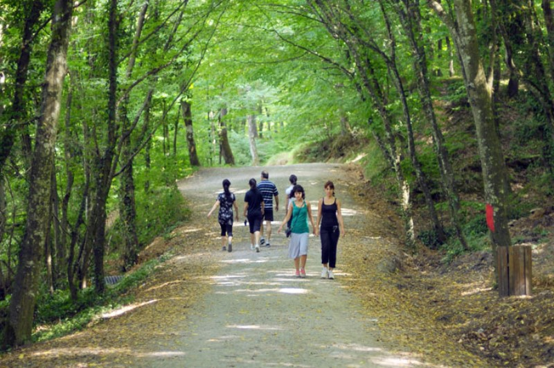 Belgrad ormanı piknik alanları